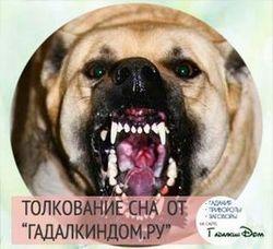 Фото Сонник видеть живой умершую собаку