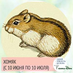 Хомяк (с 10 июня по 10 июля)