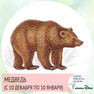 Медведь (с 10 декабря по 10 января)