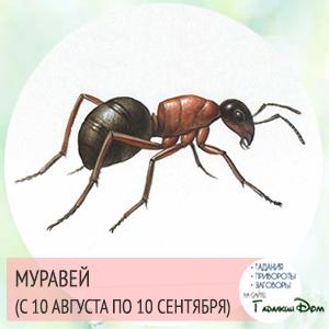 Муравей (с 10 августа по 10 сентября)