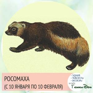 Росомаха (с 10 января по 10 февраля)