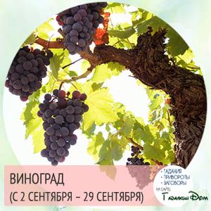 Виноград (с 2 сентября – 29 сентября)