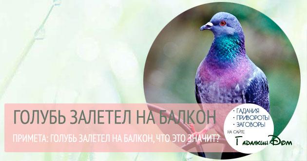 голубь залетел на балкон
