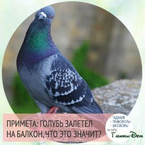 голубь залетел на балкон, что это значит