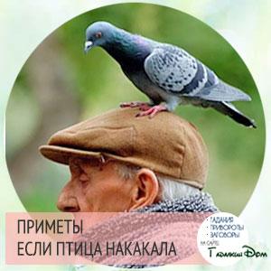 птица вас пометила народная примета