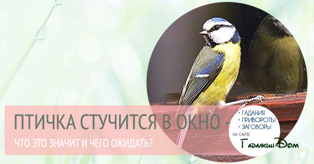 Примета: птица стучится в окно