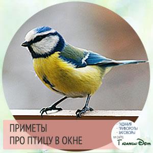 Разные приметы: птица стучится в окно