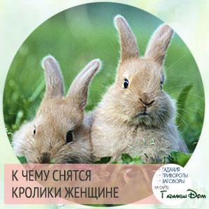 Снятся кролики к беременности фото