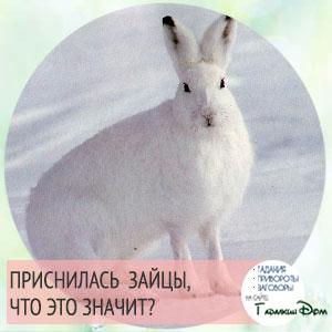 значение сна про зайцев