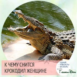 к чему снится крокодил женщине сонник ванги