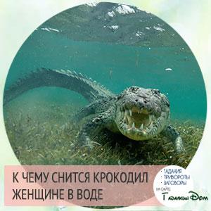 к чему снится крокодил женщине в доме