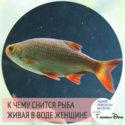к чему снится живая рыба