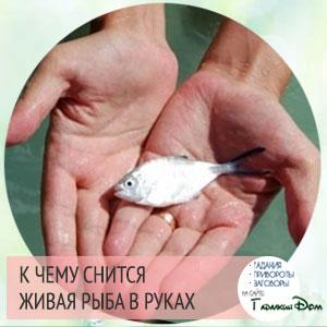 к чему снится много живой рыбы