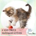 к чему снится маленький рыжий котёнок