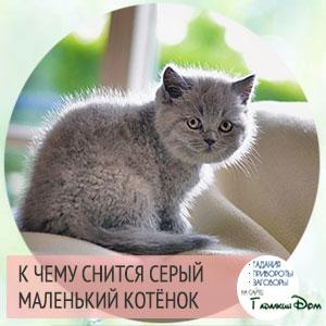 к чему снится черный маленький котёнок