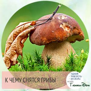 к чему снятся белые грибы опята лисички шампиньоны