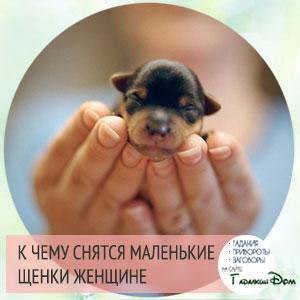 цвет щенка во сне
