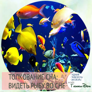 сонник много рыбы во сне