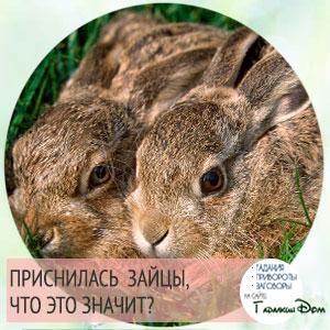 сон про зайцев что означает