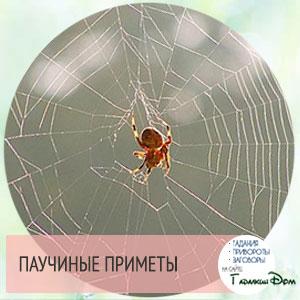 если увидели паука