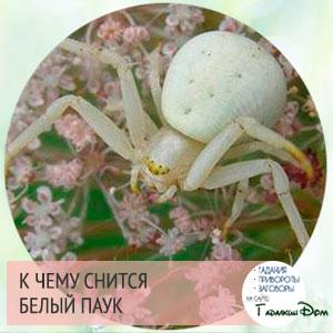 к чему снятся пауки маленькие