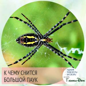 к чему снится паук большой черный?