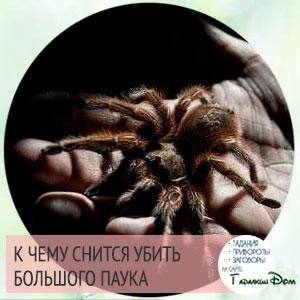 к чему снится большой паук женщине
