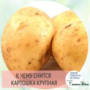 сонник жаренная крупная картошка