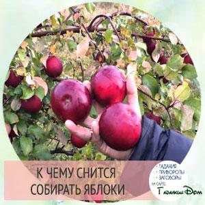 Давать яблоки снится