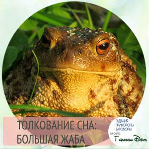 к чему снится большая жаба женщине