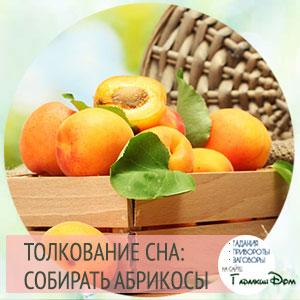сонник абрикосы на дереве