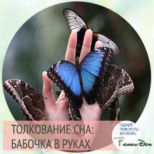сонник много бабочек