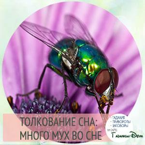 сонник много мух