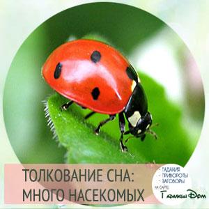 К чему снятся насекомые во сне thumbnail