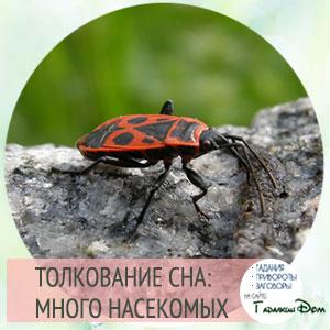 сонник насекомые