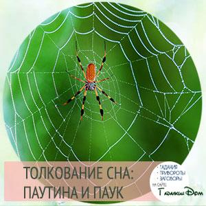 сонник паутина