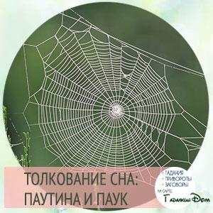 к чему снится паутина в доме