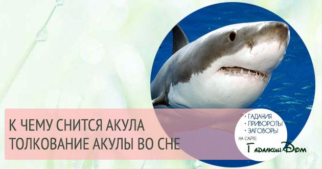 к чему снится акула по различным сонникам