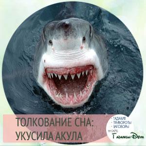 толкование акулы по соннику