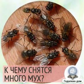 много мух сонник