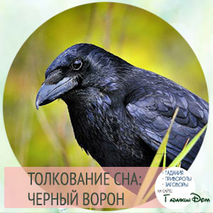 сонник черный ворон