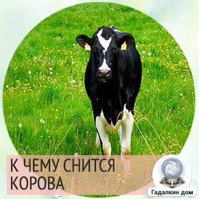 Если увидели во сне стадо коров с телятами, то в скором времени познакомитесь с дальними родственниками и узнаете о пополнении в семье.