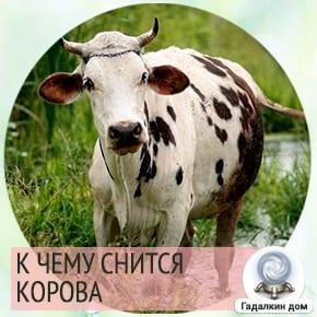 Если во сне вы убегали от коровы, то ваши враги снова напомнят о себе.