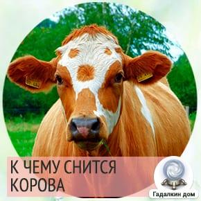 Корова во сне говорит о вашей готовности заботиться о близких, оберегать их порой жертвуя своими потребностями и желаниями.