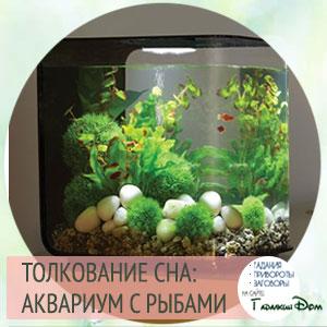 аквариум во сне
