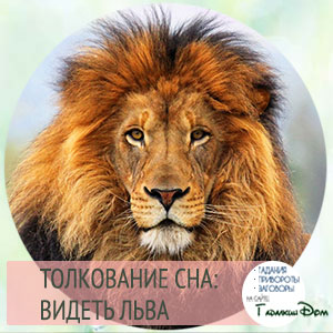 видеть льва во сне