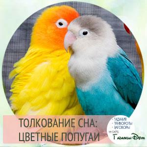 сонник попугаи