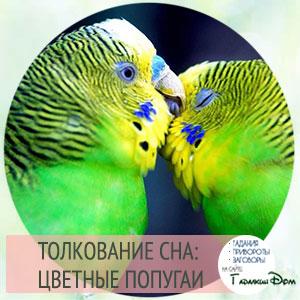 попугаи во сне