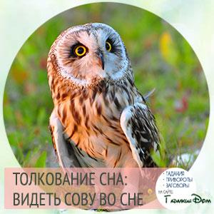 сонник сова