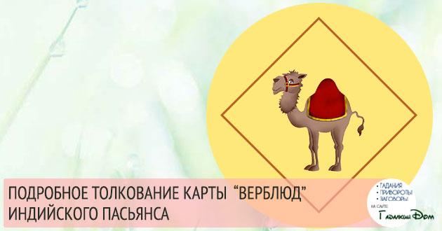 """Символ """"Верблюд"""" в гадании Индийский Пасьянс"""